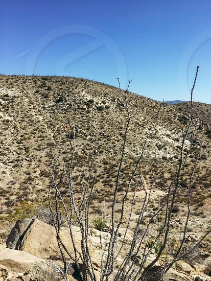 Desert; New Mexico; peace photo