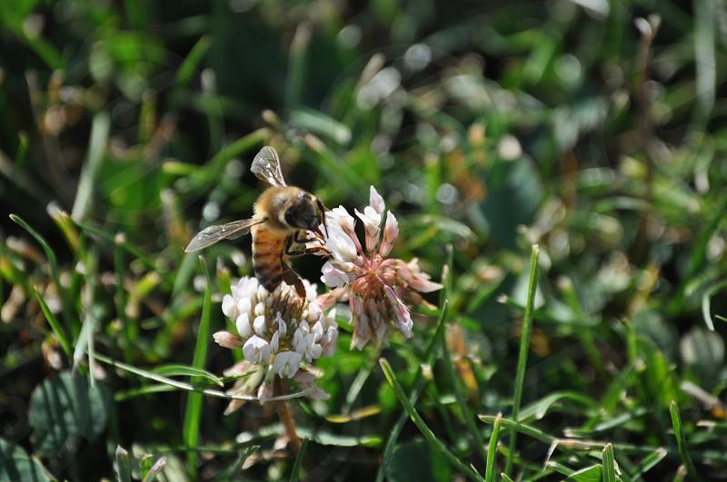 Bee Pollen photo