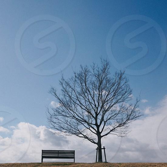 black tree beside black wooden outdoor bench photo