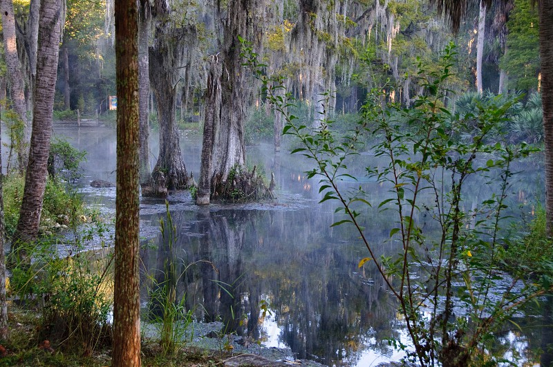 Sunrise at natural spring in Florida with fog and reflection photo