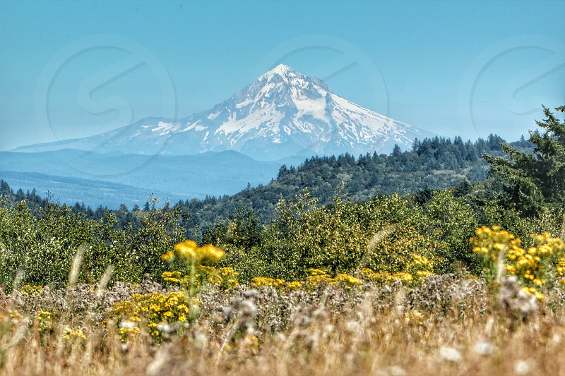Mt Hood from Powell butte photo