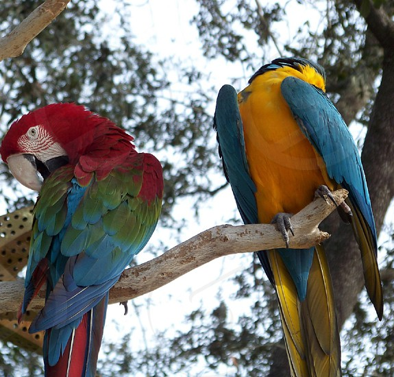 Beautiful and colorful parrots in the trees photo