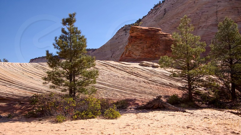 Strange Rock Formation and Checkerboard Mesa in Zion photo