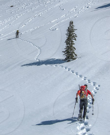 Snowshoeing in Olympic National Park WA photo