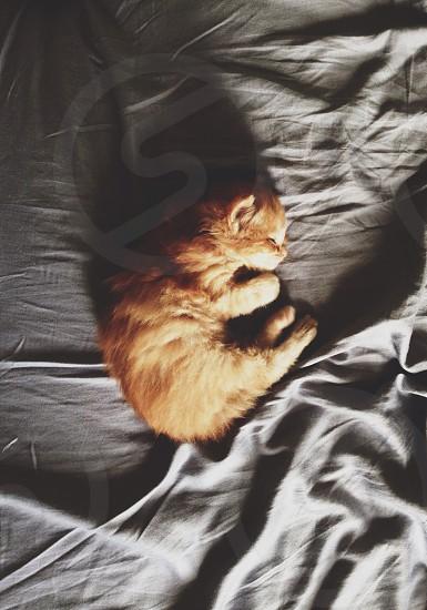 orange kitten photo