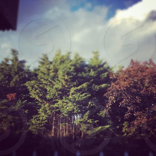 Tree sky clouds photo