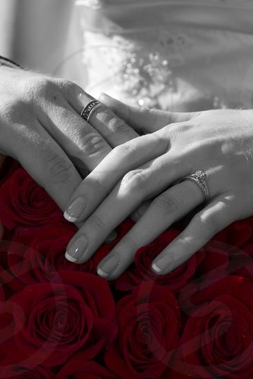 Loves Embrace  photo