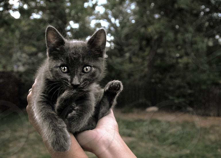 Cute grey kitten photo