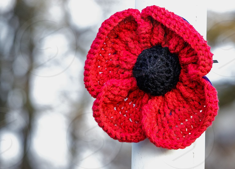 Special knitted poppy to Commemorate the ending of the First World War photo