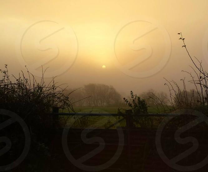 Morning dew Lochfoot dumfriesshire Scotland  photo