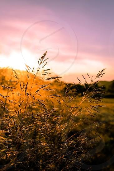 Sunset through the grass photo