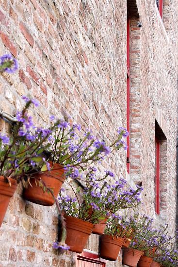 Europe Brugge Brick wall Flowers Purple photo