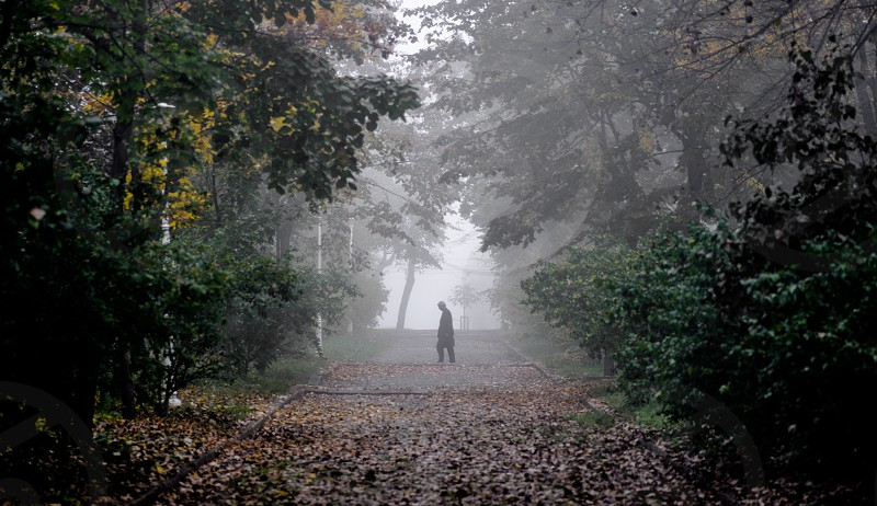 A lonely walk photo