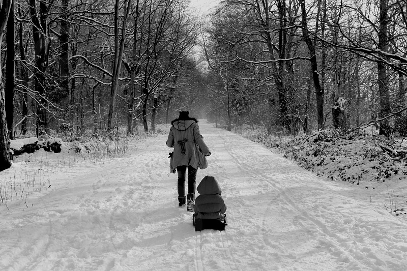 A mother pulling her child on a sled in the snow down a tree lined path.  photo