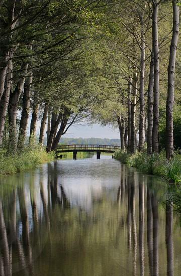 river under bridge in between trees photo