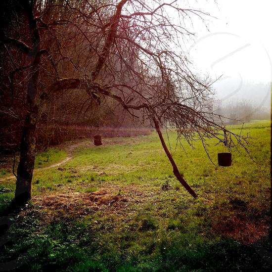 tree branch photo
