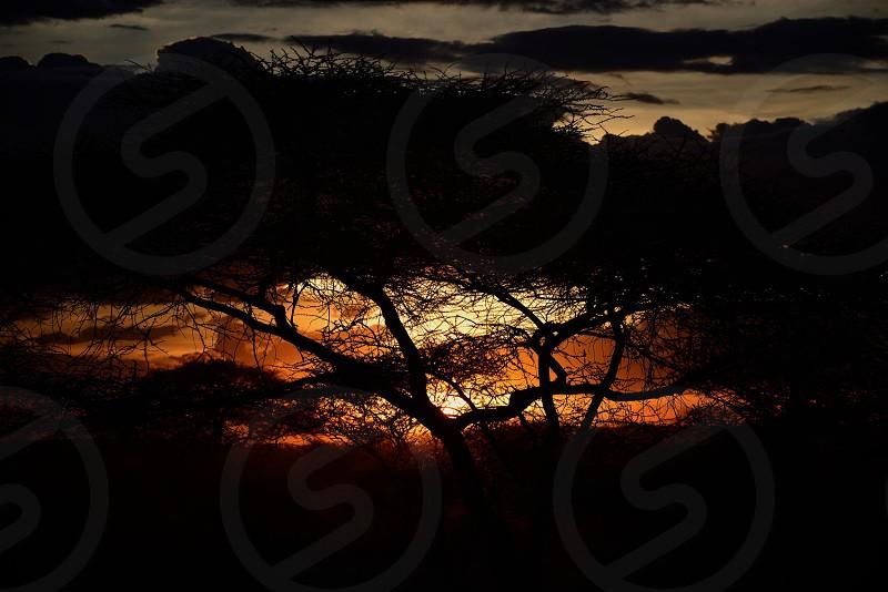 Golden Hour Wilderness photo