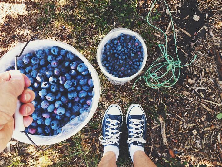 Berry picking photo