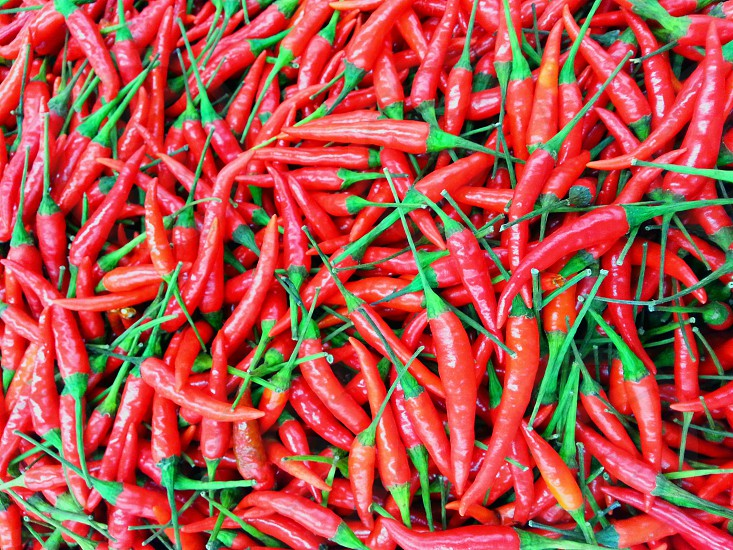 bundle of chili pepper photo