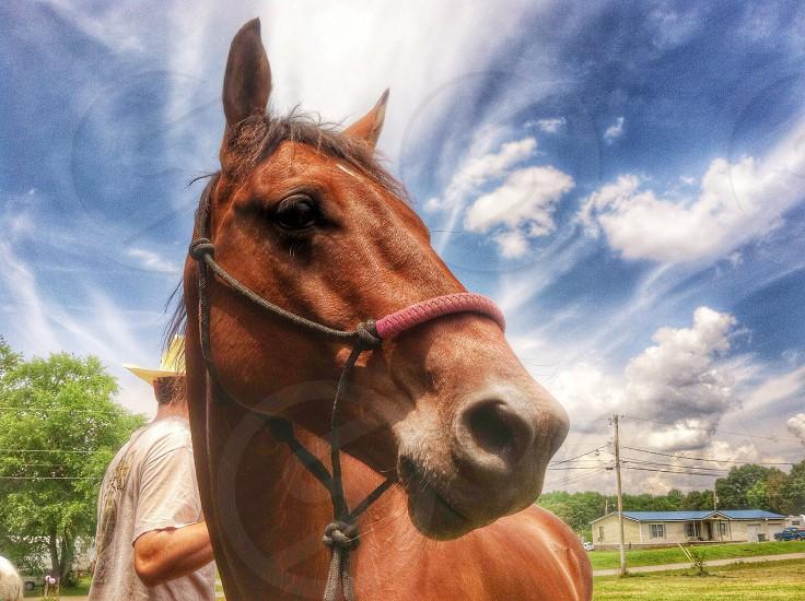 brown horse photo