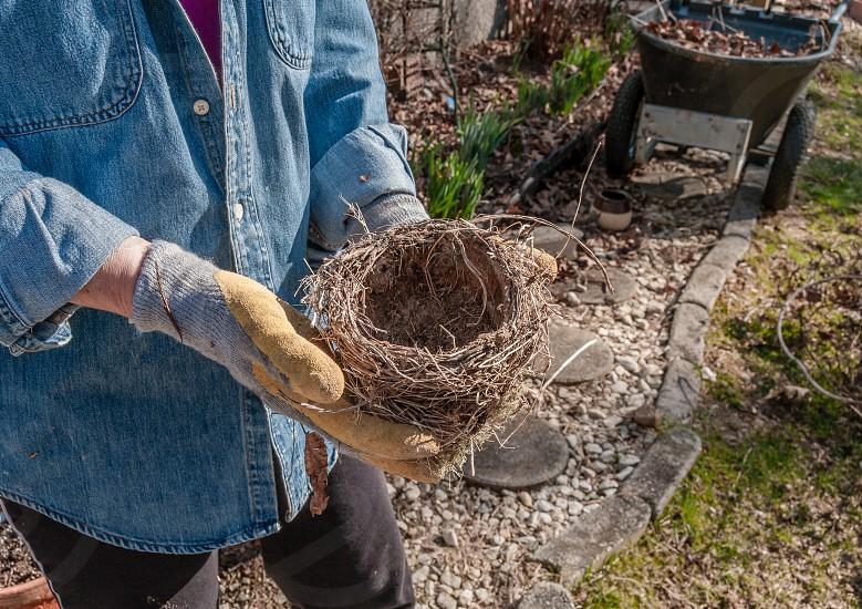 Gardener Gardening Gloves Wheelbarrow Gravel Path Stepping Stones Birds Nest Blue Jean Shirt photo