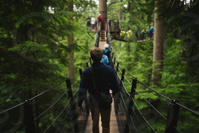 Bridges in the tree tops photo