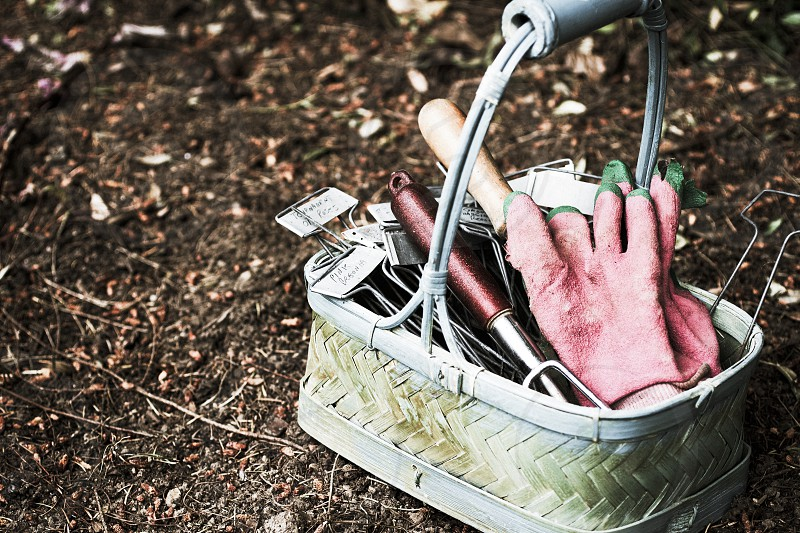 Basket of garden tools garden tools planting food agriculture farming farm to table vegetables fruit photo