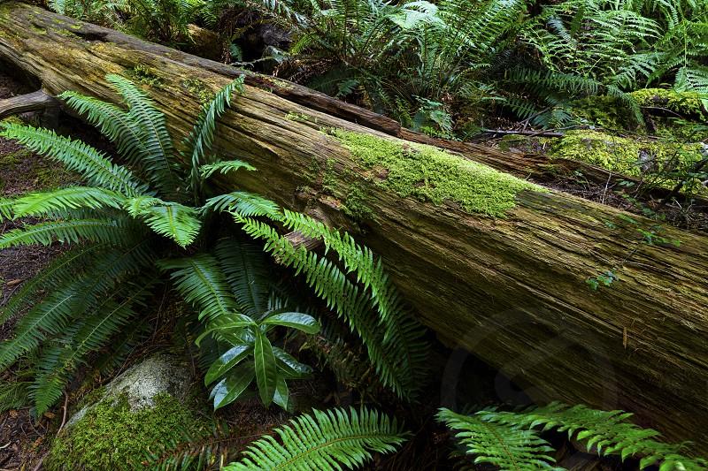 Pacific North West Rainforest Landscape Waterfalls.  British Columbia and Washington State.   photo