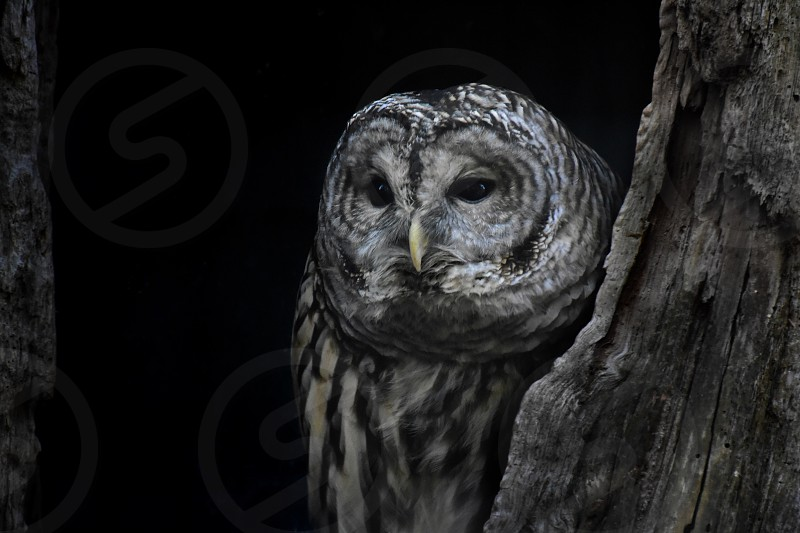 white and gray owl beside tree trunk photo