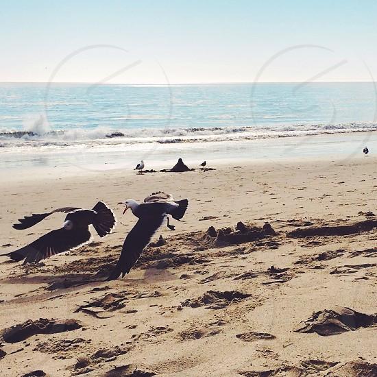 white and black bird by the seashore photo