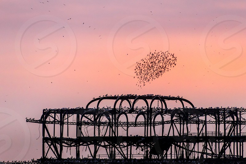 BRIGHTON EAST SUSSEX/UK - JANUARY 26 : Starlings over the derelict West Pier in Brighton East Sussex on January 26 2018 photo