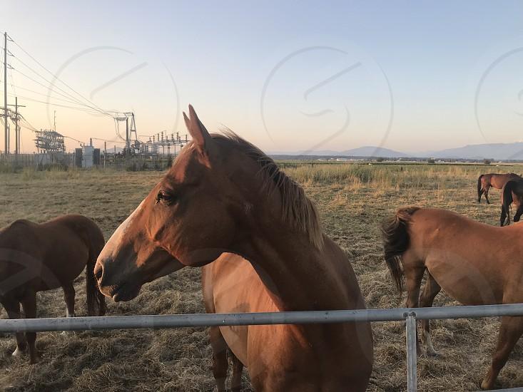 My horse at sunset. photo