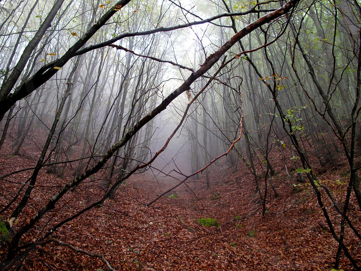 nature wild curiosity landscape mountain trees wood forest fog story supernatural photo