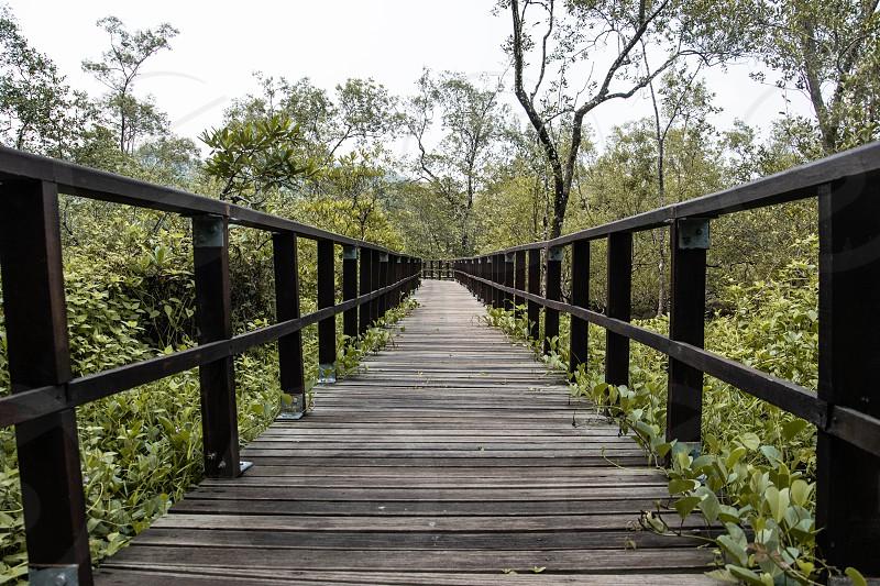 Bako National Park Kuching Sarawak Malaysia. photo