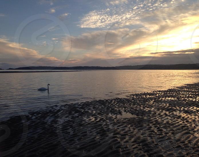 Swansea -literally photo