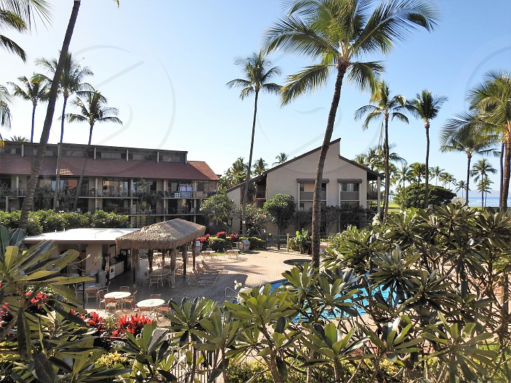 Ocean Resort On Maui          photo