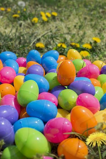 Easter Spring Vibrant Color Egg Outdoor grass photo