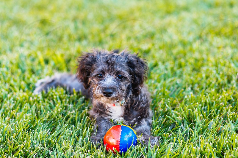 puppy dog grass bella play playful pup out doors photo