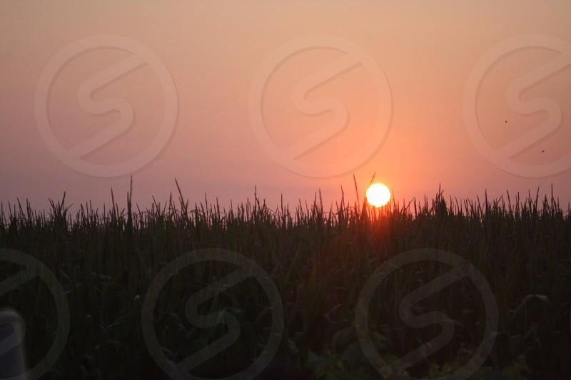 Beautiful Midwest sunset over a cornfield photo