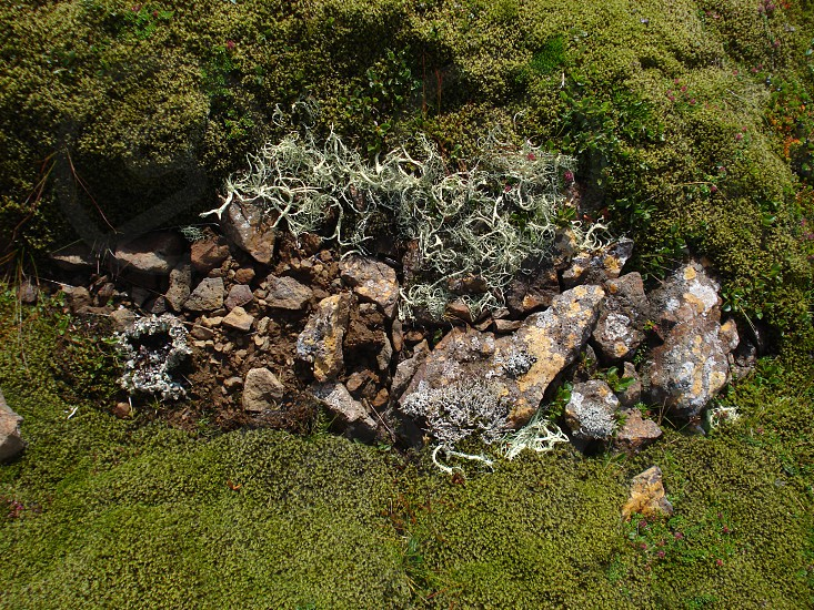 Moss and Pebbles 2. Iceland nature. photo
