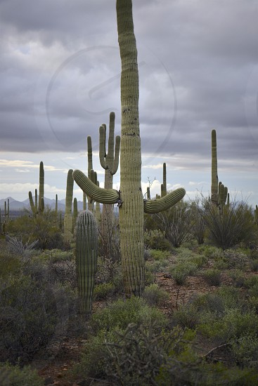 Cactus and Deserts photo