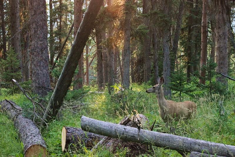 Deer at dusk. photo