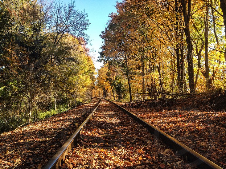 Fall back yard tracks colors beauty photo