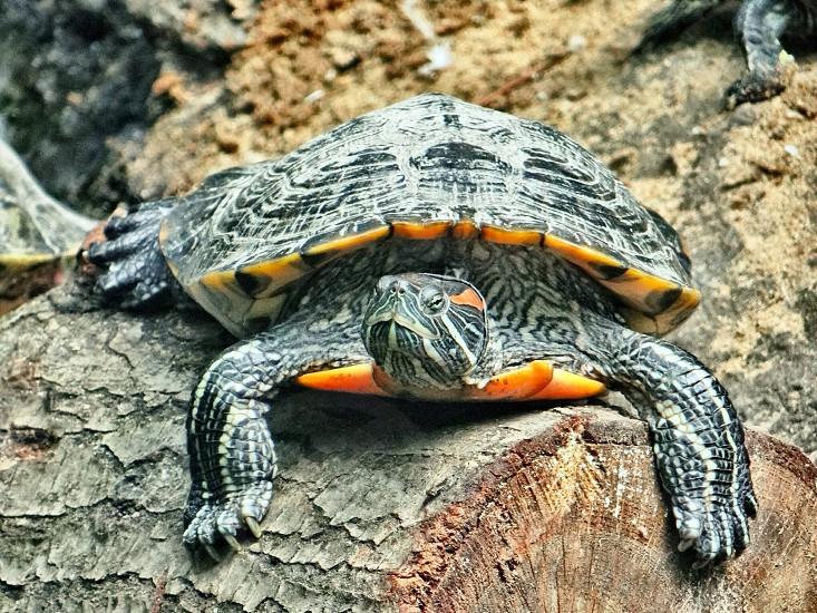 green turtle on tree trunk photo