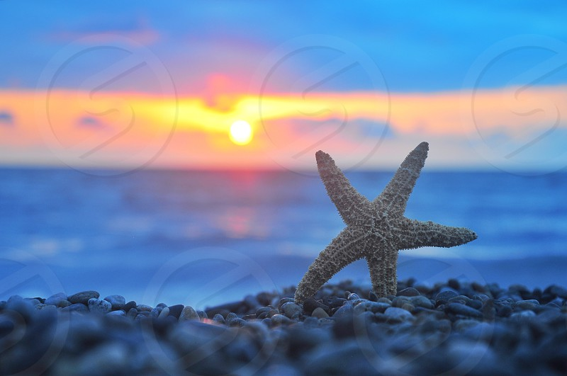 brown starfish on pebbles photo