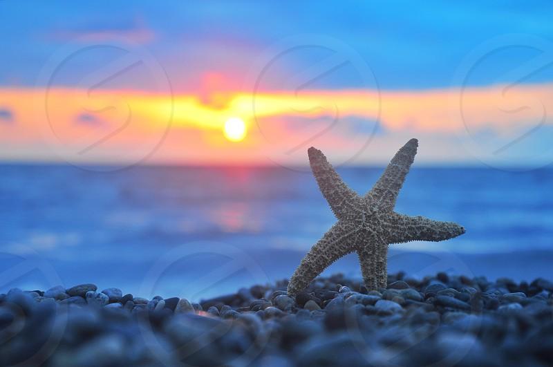 grey starfish on seashore on sunset photo