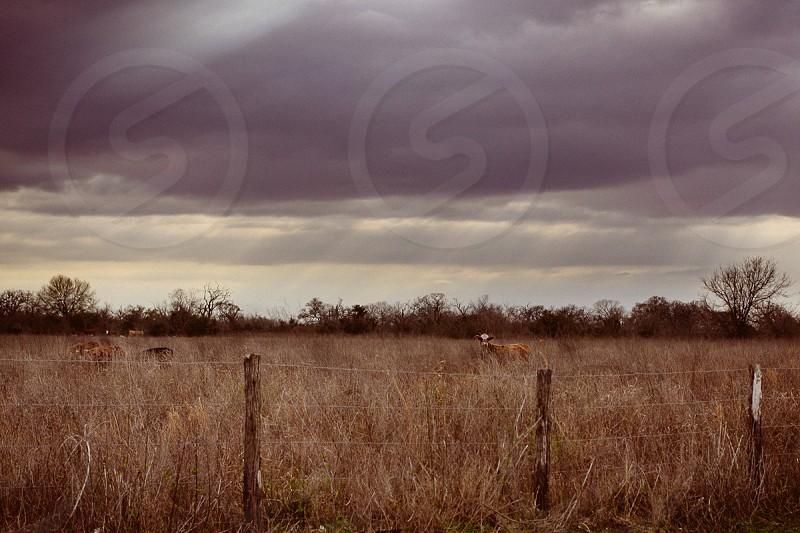 Rain cloud field cow fence storm landscape photo