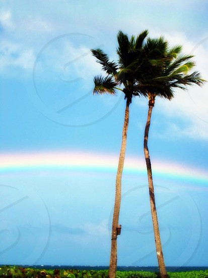 Palm Trees and Rainbow photo