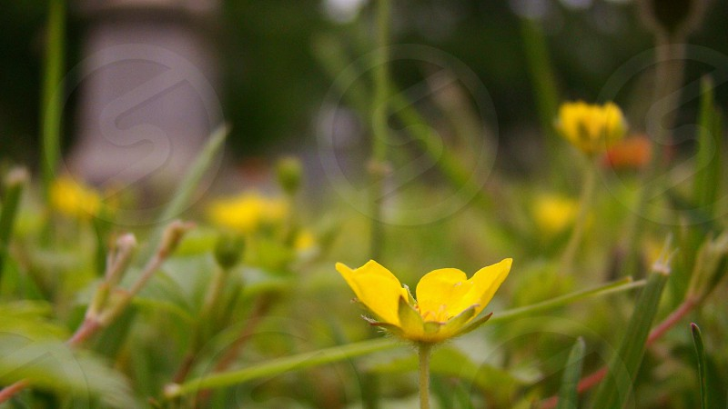 selective focus photography of yellow petaled flower photo