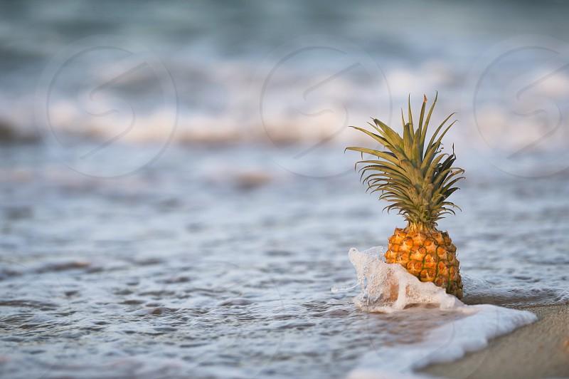 Pineapple ocean beach Hawaii Oahu photo